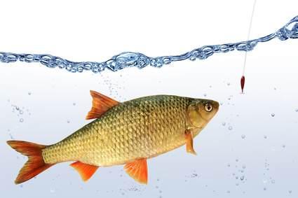 Unterwasserkamera und Angeln - Fisch beim Biss