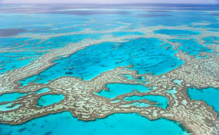DDas Great Barrier Reef mit seinen Tauchspots ist ein absolutes Highlight für Taucher.