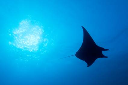 Manta Ray Village befindet sich in Kailua-Kona auf Big Island in Hawaii