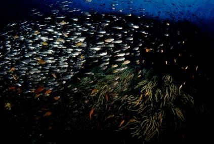 Das Tauchgebiet. Samarai Island ist bekannt für gewaltige Fischschwärme.