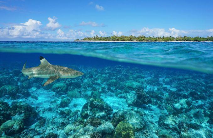 Lebensraum des Schwarzspitzen-Riffhais
