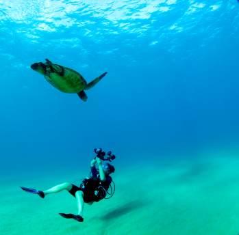 Die Faszination des Tauchens wird durch eine Unterwasserkamera doppelt schön.